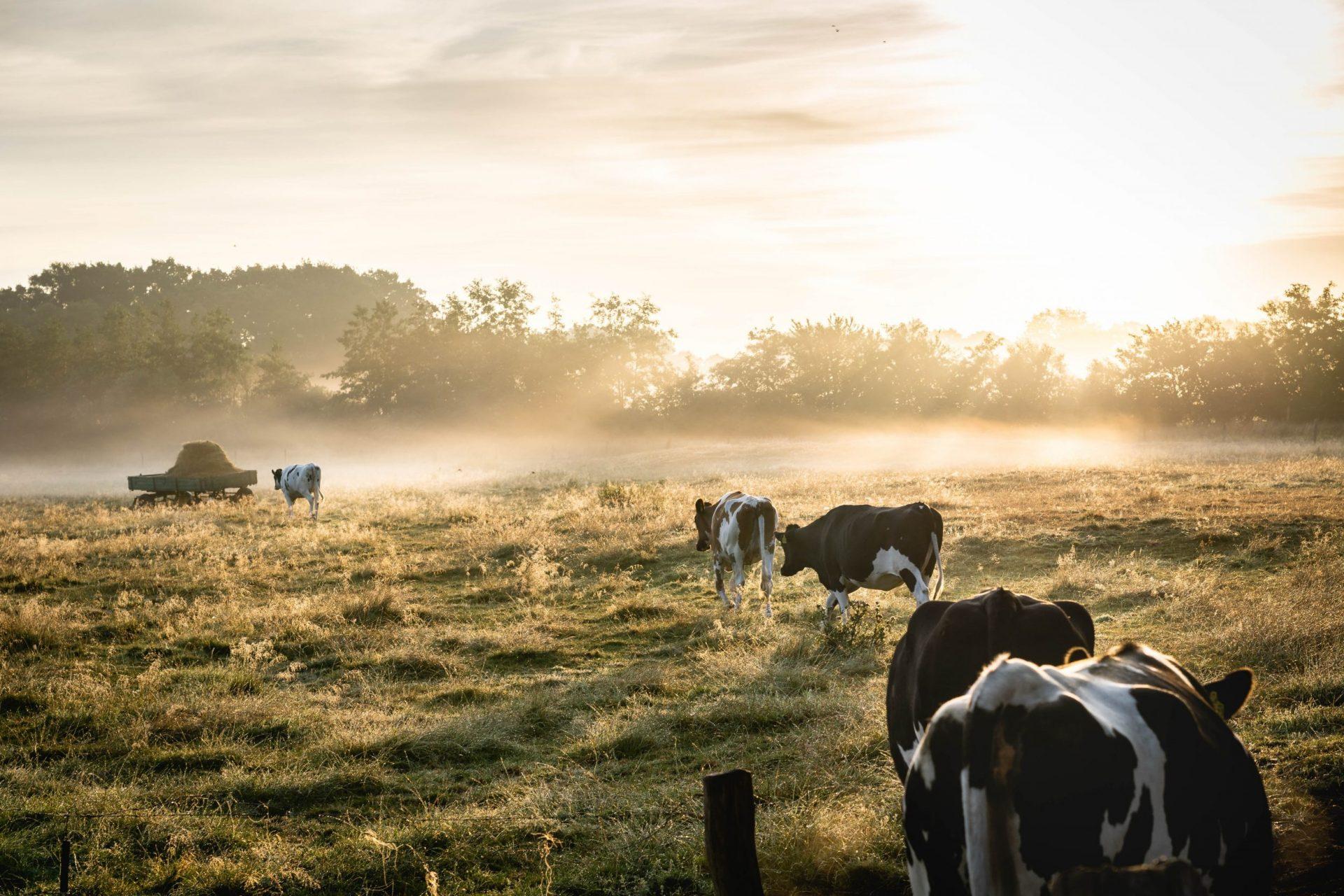 Farm Profitability